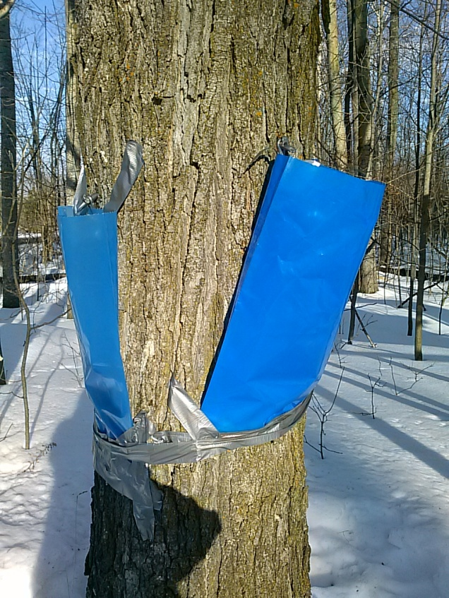 Tree sap collection bags