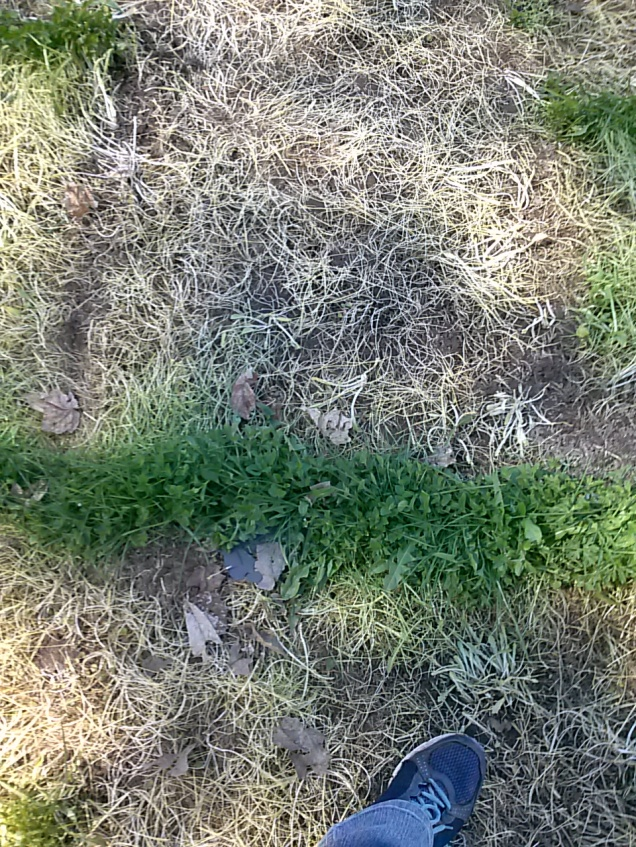 Darn grass!  Here's a small strip I'll have to dig up.