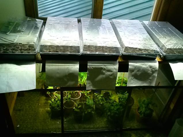 My seed starting setup.