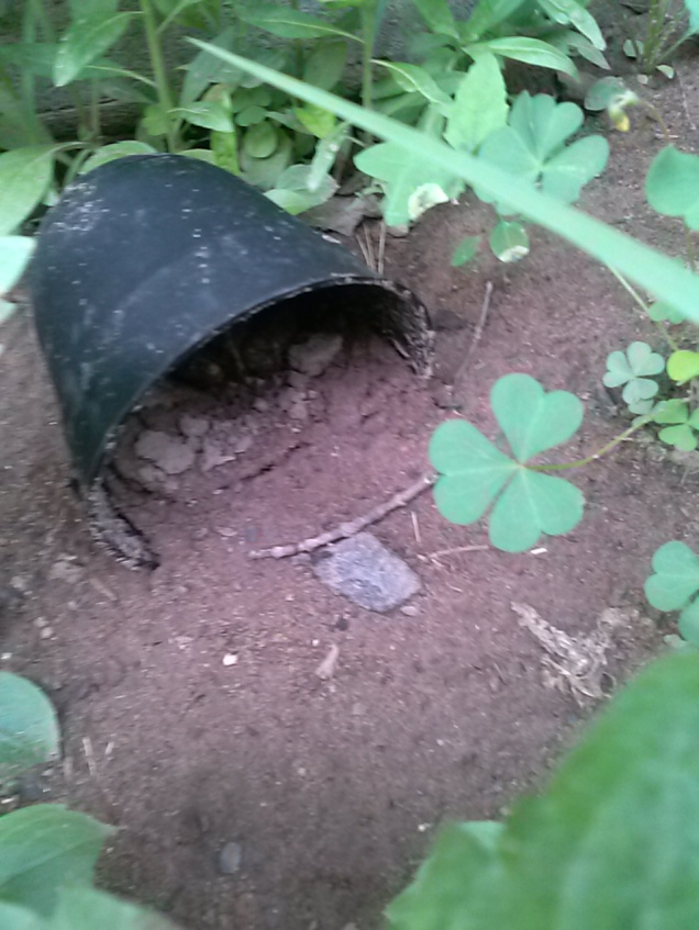 The other night it was going to storm. It was the 2nd time I'd run into Mr. Toad. So I found a flower pot and made him a toad house. The plants aren't really big enough to give him any shelter yet. He went inside and I saw him in there later on, looking out, like he liked his house.