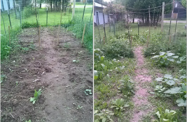 The left shows my garden on June 24th, and the right is my garden today, 7/12/15.