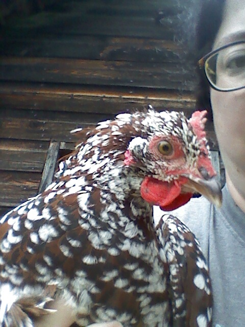 Our hen - I had to hold her to get her picture.