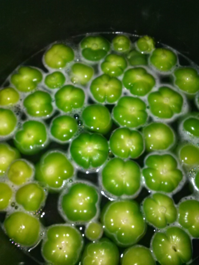 Tomatillos in a big soup pot - getting ready to be made into Salsa Verde.