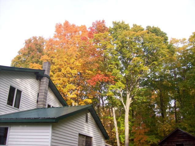 Here are some of the trees in our yard.