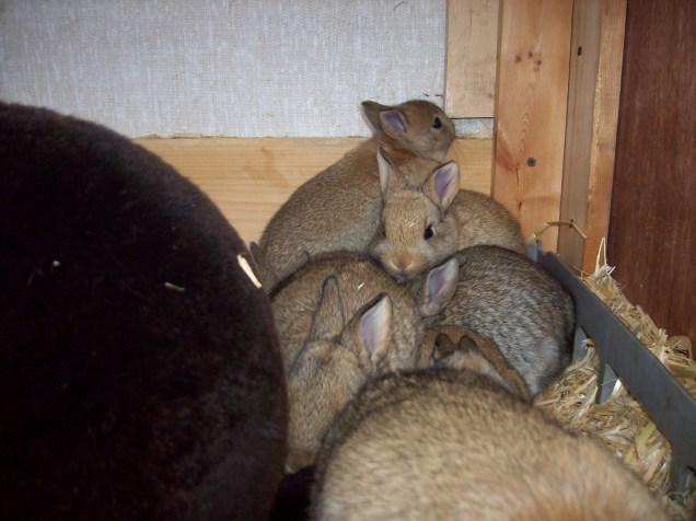 baby bunny pile