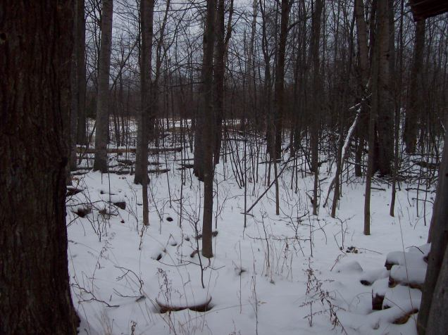 woods with snow