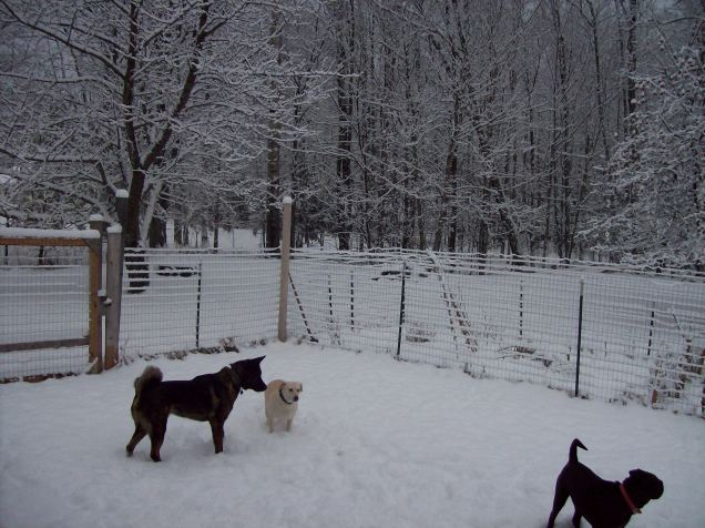 dogs in the snow 2