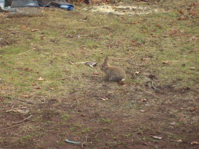 runaway bunny 2