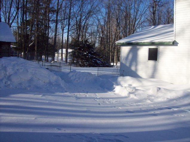 snowy side yard