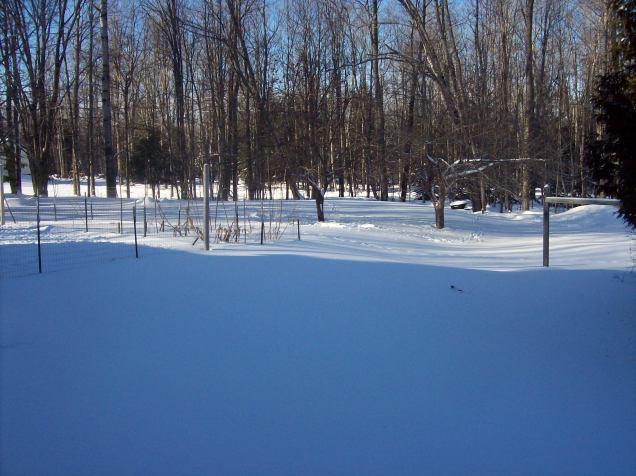yard under snow
