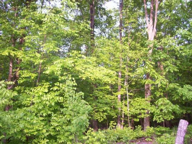 woods (2)