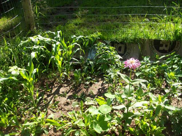 daniels garden