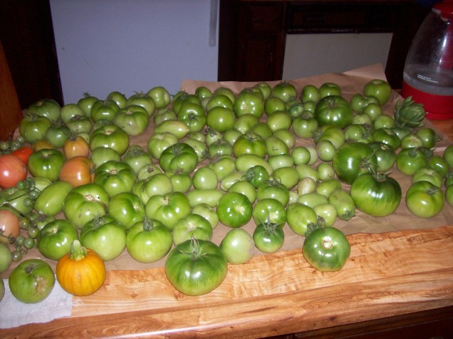 green-tomatoes