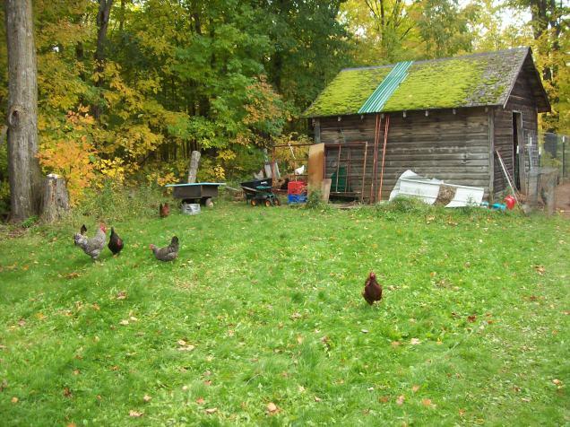 yard-birds-2