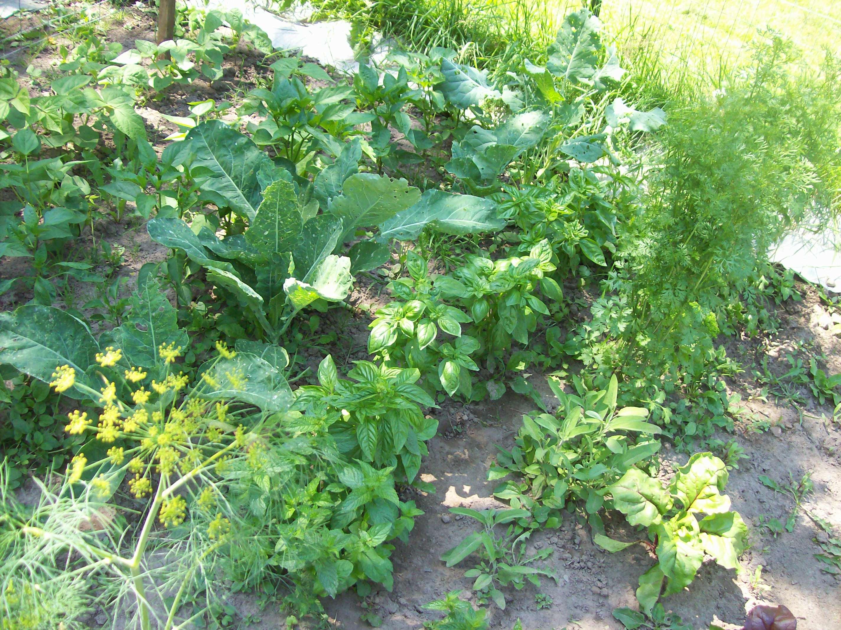 herbs and stuff