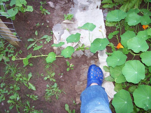nasturtium on the run