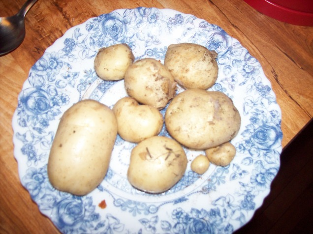 tiny potatos