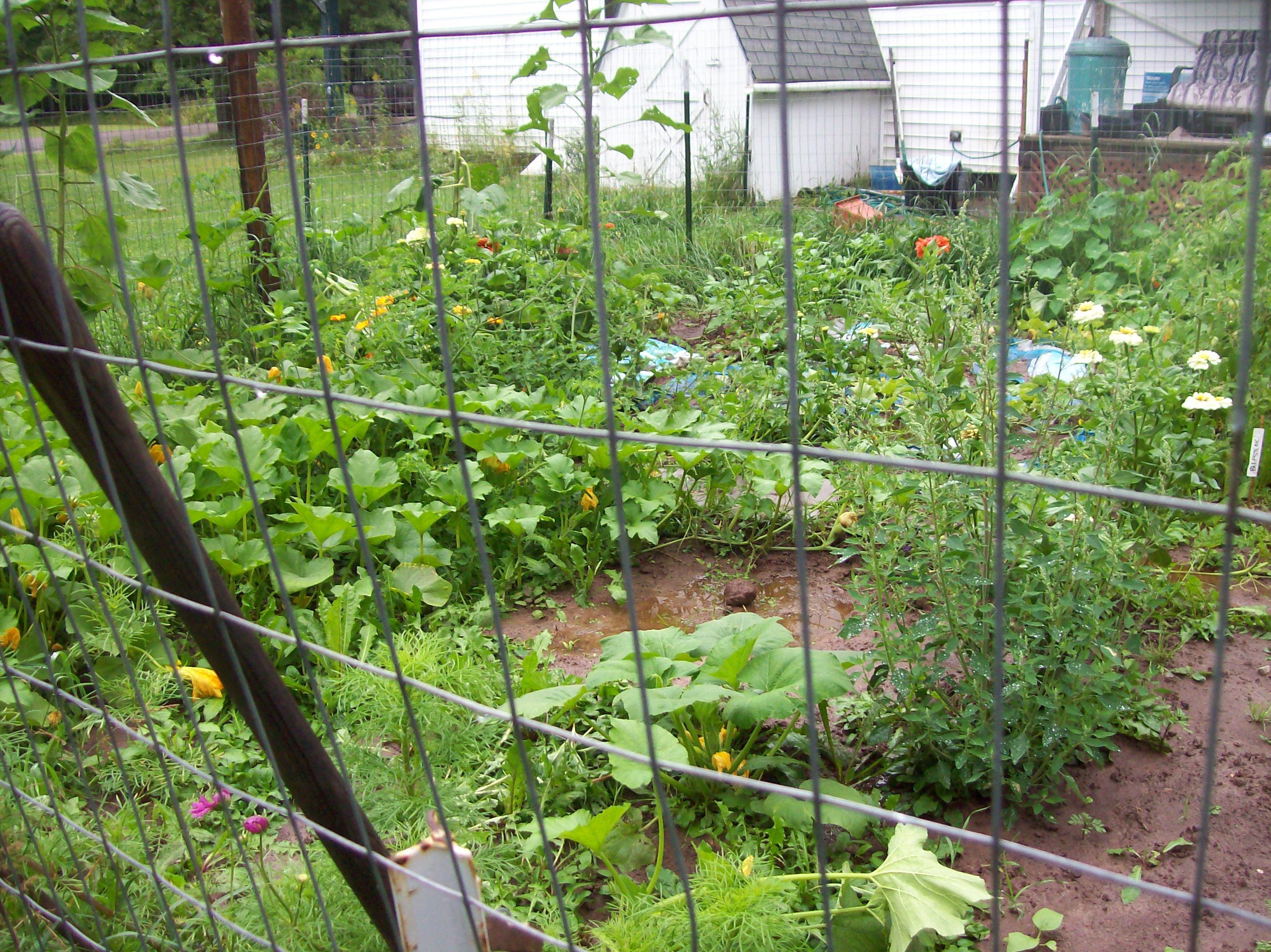 sopping wet garden