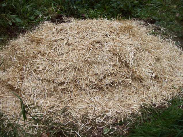 straw cover