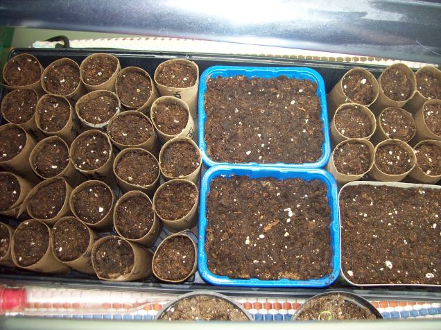 new seed starts