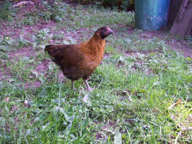 bright chick