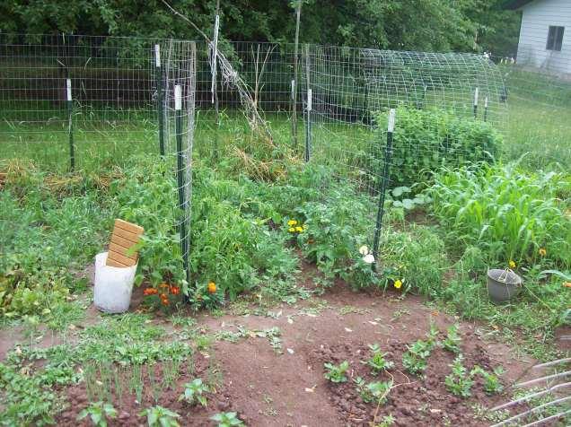 tomato fencing
