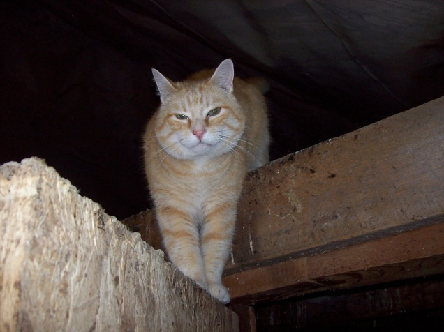 cat in rafters