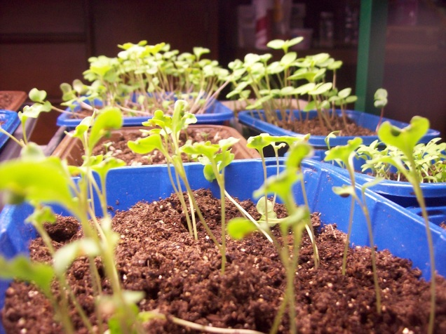seedlings 2