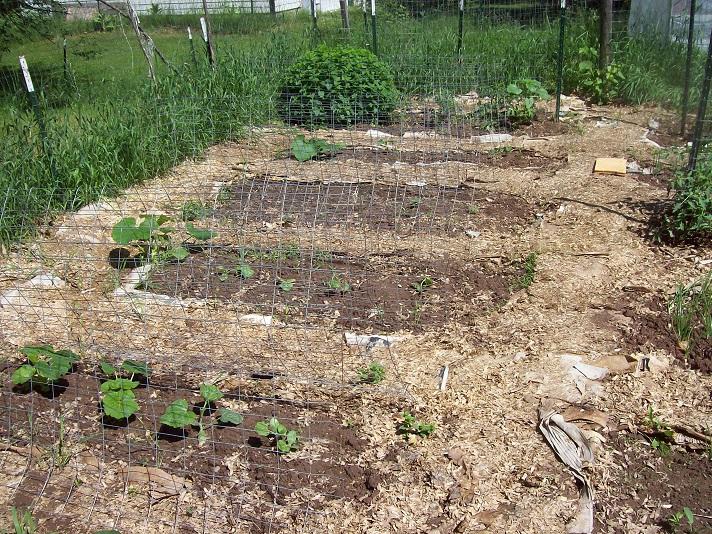 main-garden-2