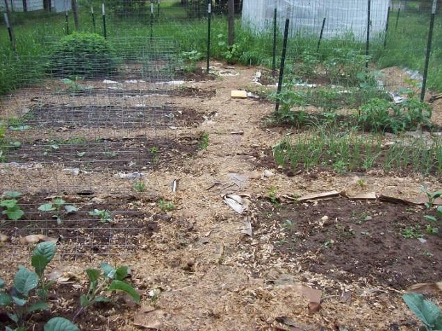 main-garden-june-20